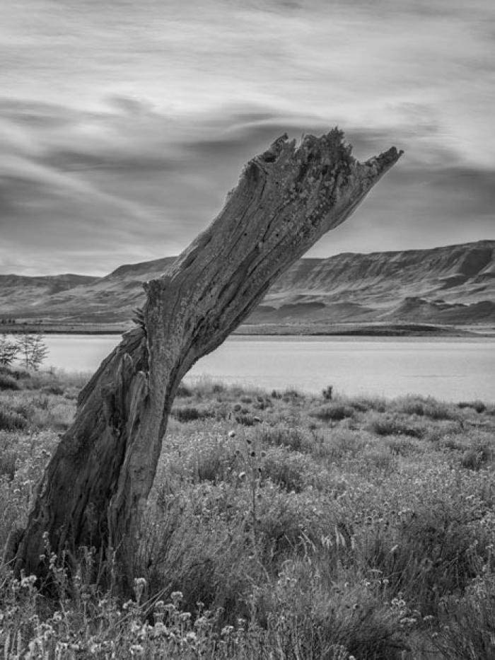 Dead Tree by Lake Argentina, Patagonia