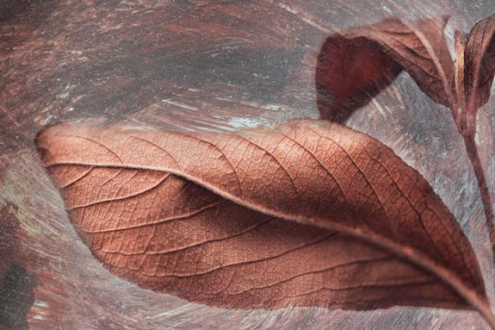 Dried Autumn Leaves on a texture