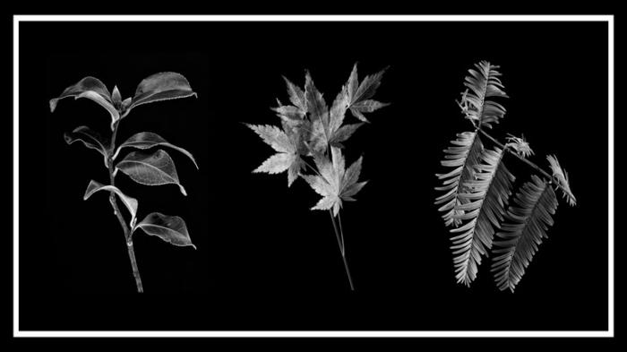 Winter Foliage Triptych on a black background.